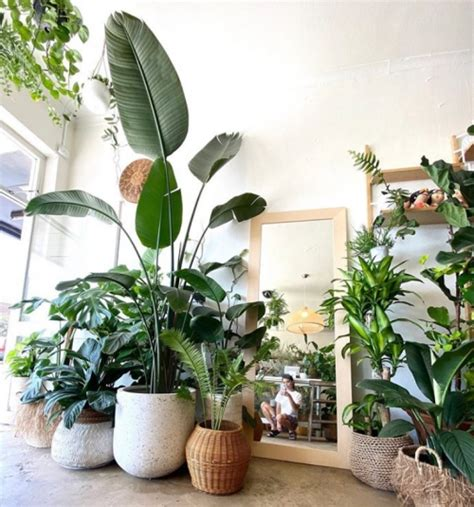 Bird of Paradise Complete Care Guide - That Planty Life