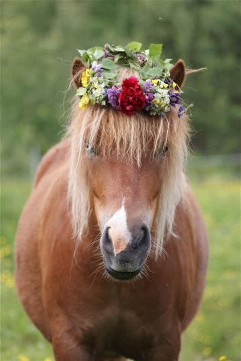 6 Horses Ready for Spring | The Original Mane 'n Tail