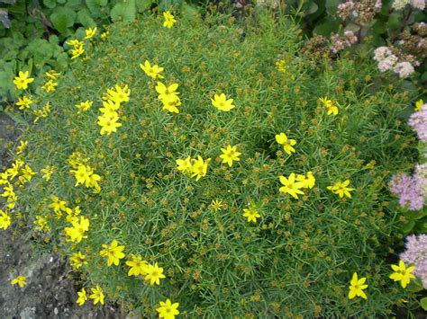 Flowering Perennials for Clay Soil | Hip Chick Digs