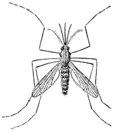 Malaria - Insects, Disease, and Histroy | Montana State